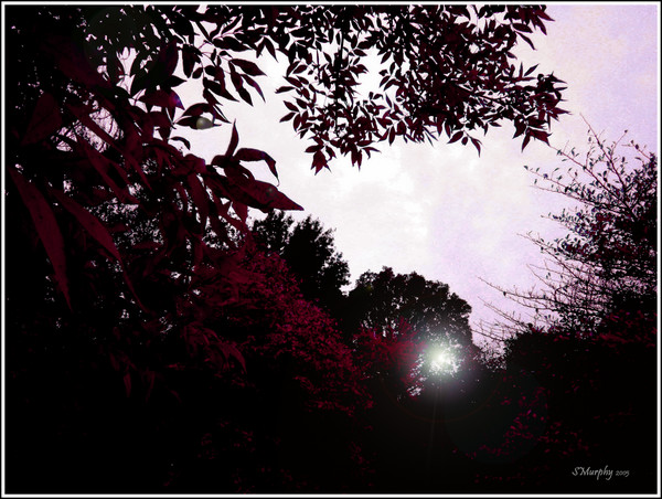 Raspberry Moon