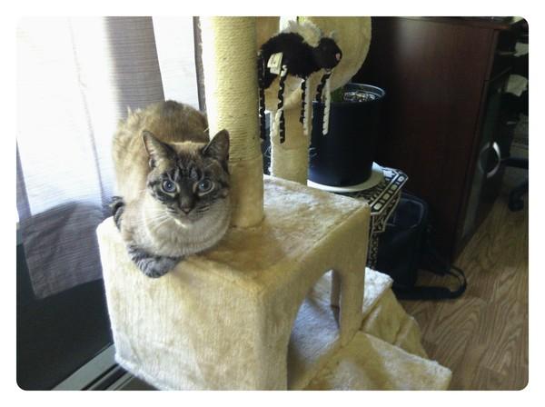 princess enjoying cat condo