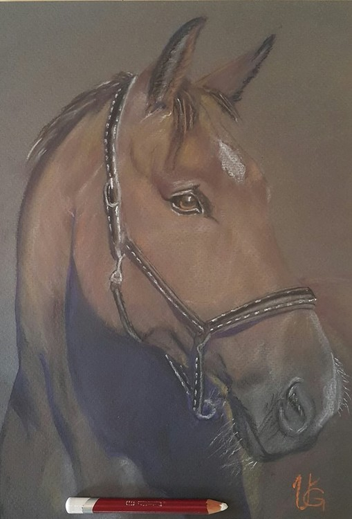 Beauty horse.....