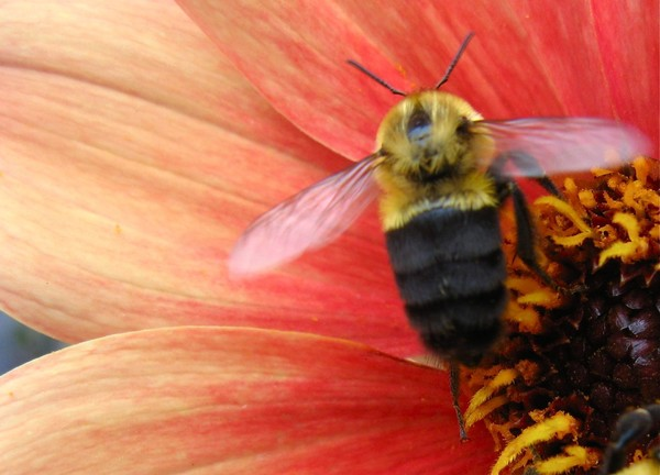 Bumblebee Pose