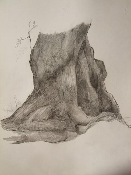Study of tree trunk