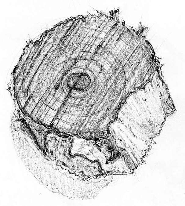 Wood Chip Drawing