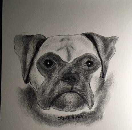 Matt Dog Face (2)