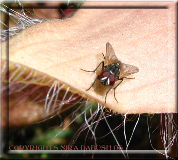 Fly...HIGH ...
