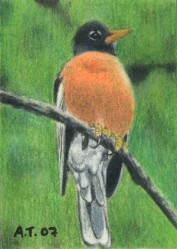 Bird on a Branch - ACEO