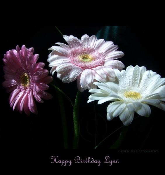 Happy Belated Birthday Dear Lynn