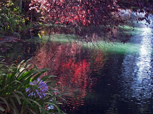 Garden and Pond Reflections