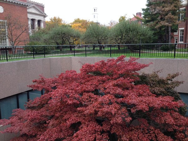 Pusey & Widener Libraries Harvard Yard