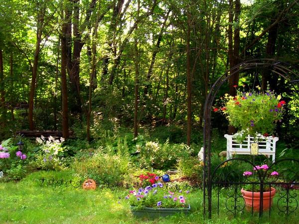 update of my garden