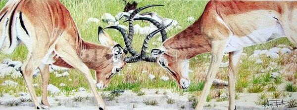 Dueling Horns