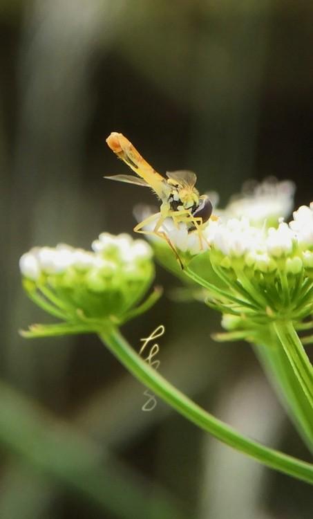 Tiny Bee II