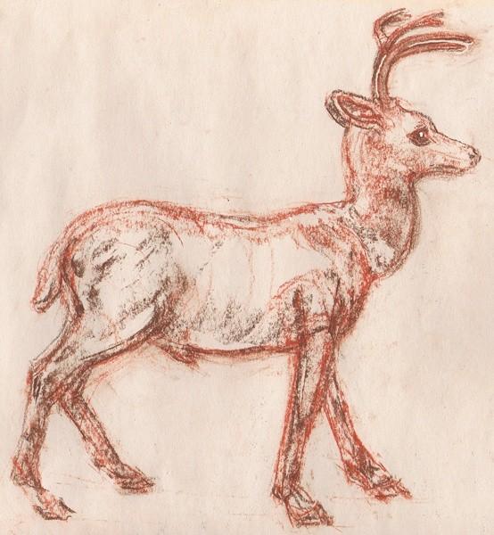 Buck Drawing
