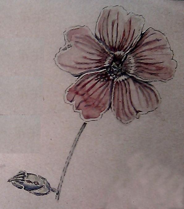 Mallow Watercolor