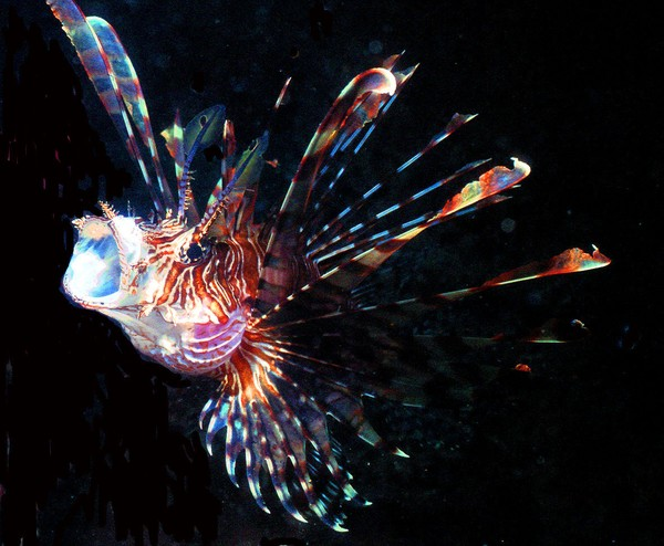 Lionfish revisited
