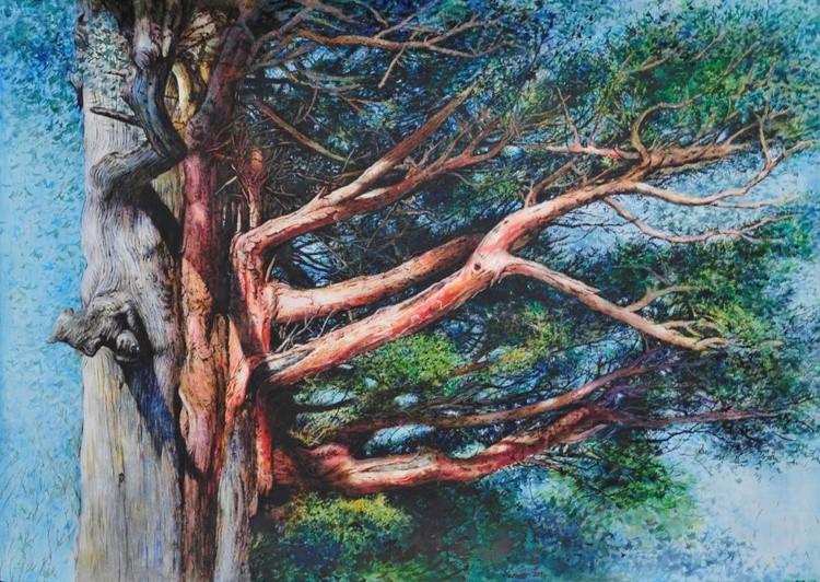Yew Tree of Korea