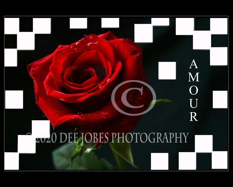 Amour Photo Art