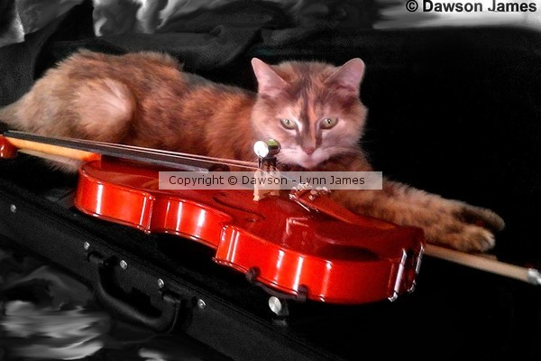 Hey diddle diddle.. the cat and the fiddle