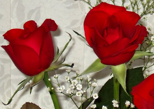 2 red roses