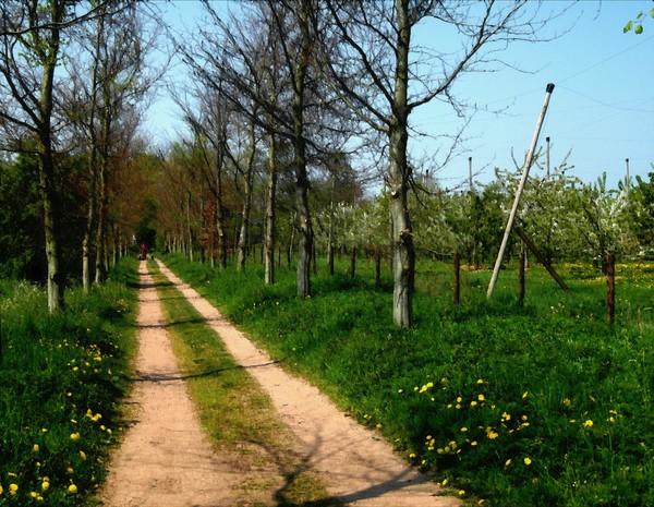 A Dutch Country Lane