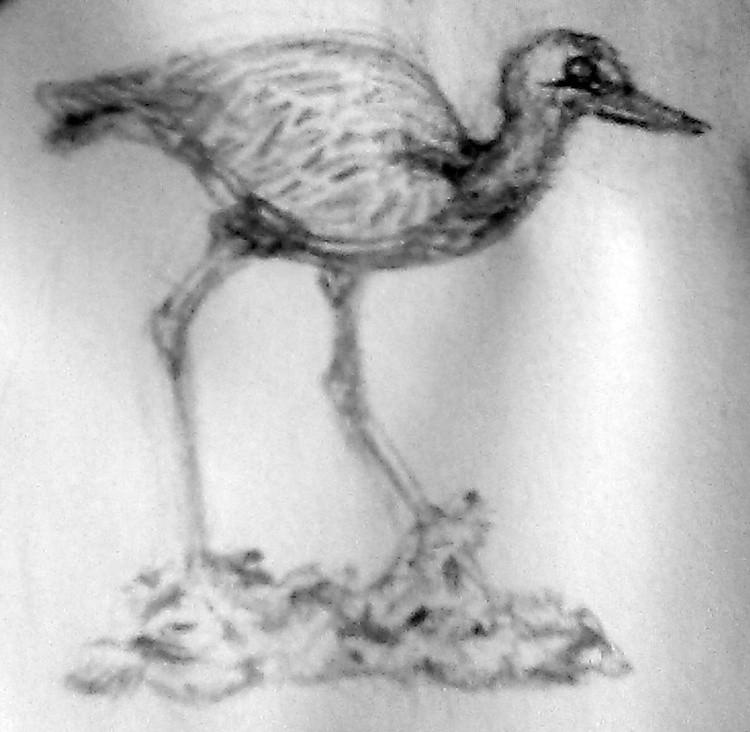 Blue Heron Sketch