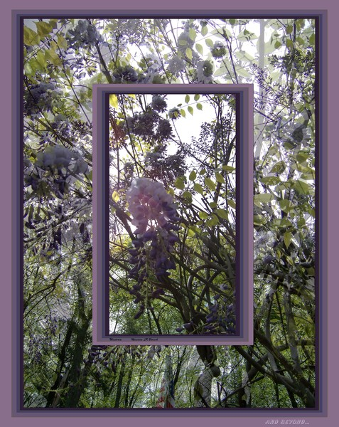 Wisteria and Beyond