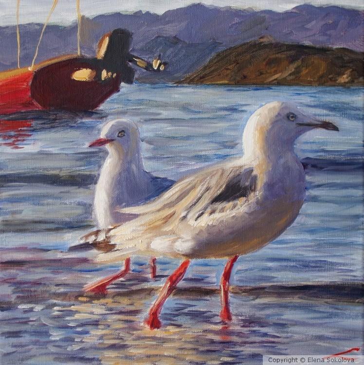 Walking seagulls