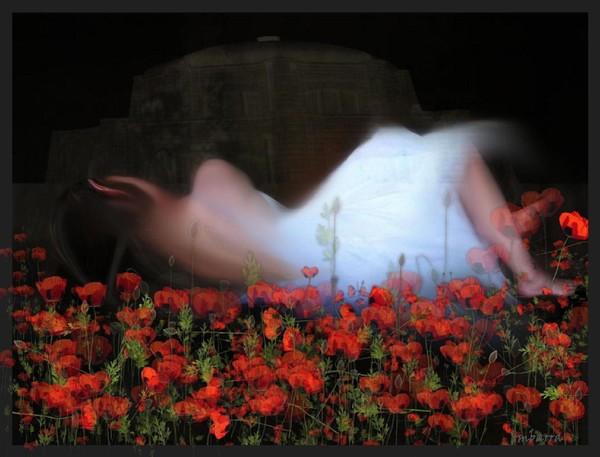 In Poppy Fields We Sleep