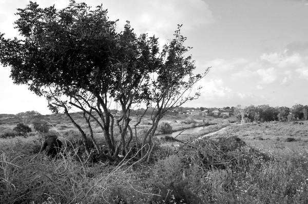 Hadera river