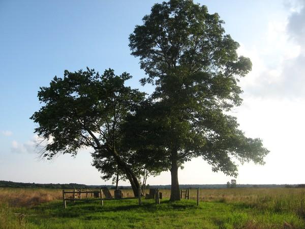 witch tree