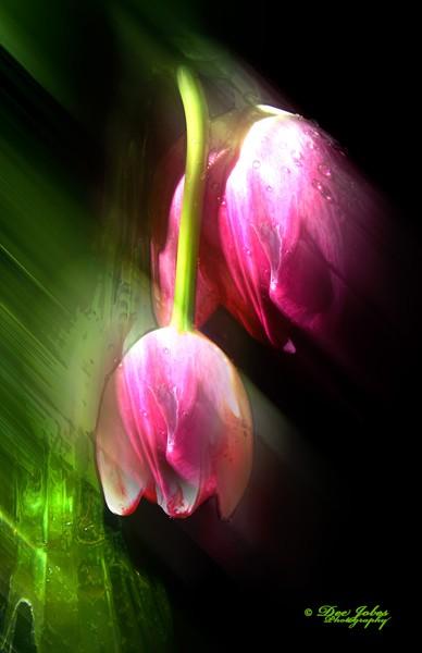Transforming Beauty