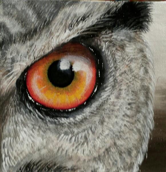 Eye of the Owl 7