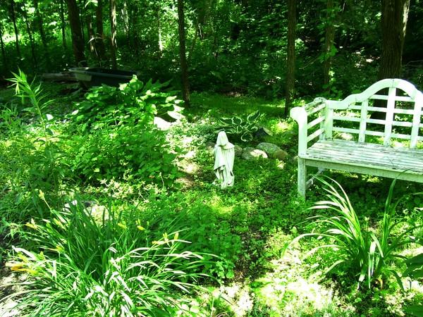 my perrenial garden
