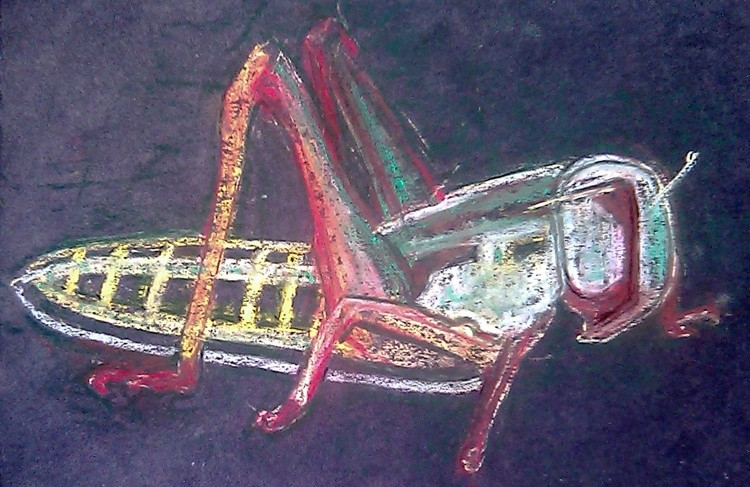 Locust Drawing