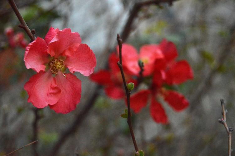 2 blossoms