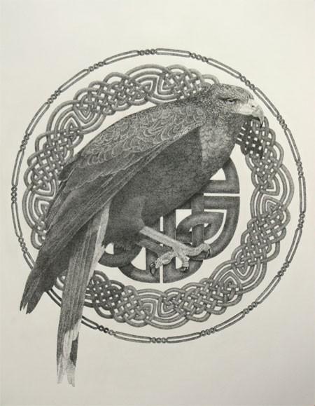 Seabhac (Harris hawk)