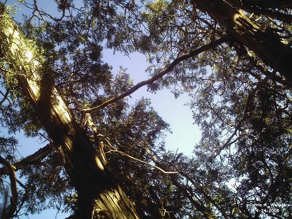 A Tree Sky