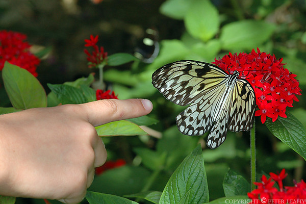 Look its a Butterfly