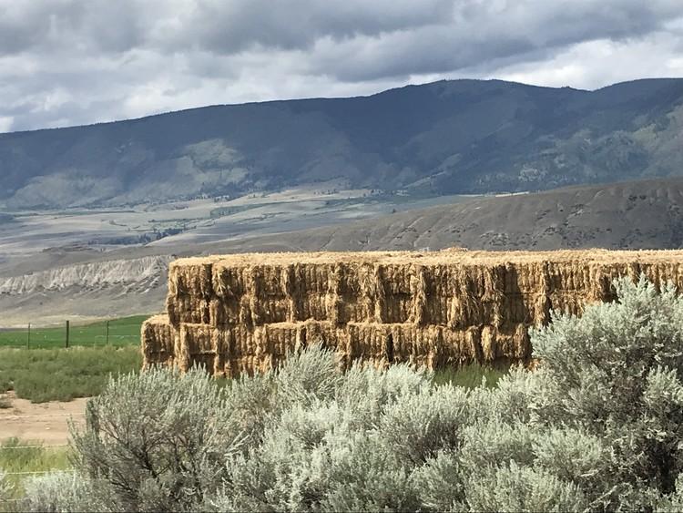 Hay in the Desert