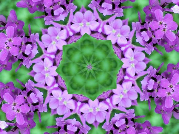 purple flower kalidiscope 1