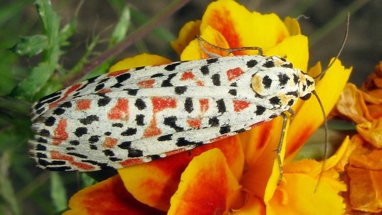 Butterfly003