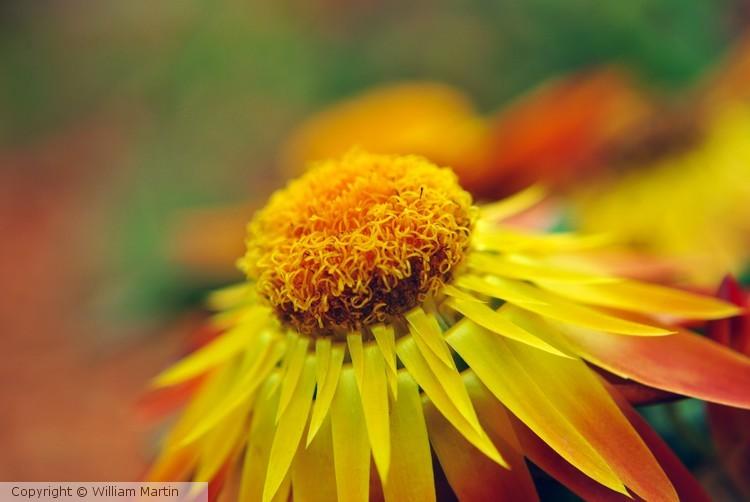 Soft Yellow Flower in Summer Sun