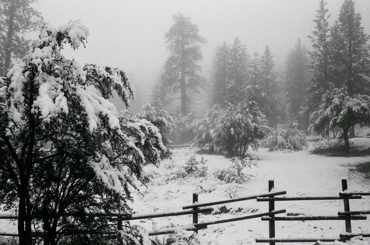 Winter's First Snow