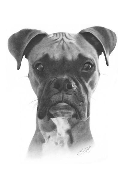 Tyson Dog Drawing