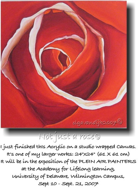 Not just a rose©