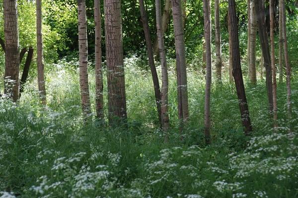 05_TreeGrass