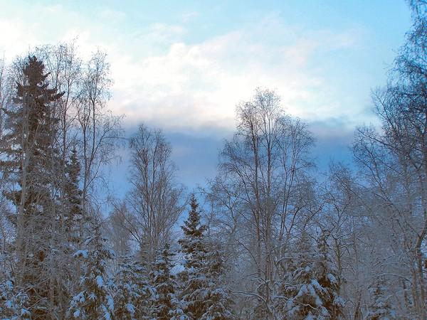 Fairbanks Backyard