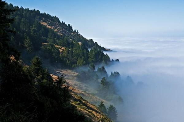 The Lost Coast Lost in Fog
