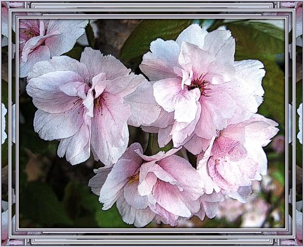 mirror frame blossom