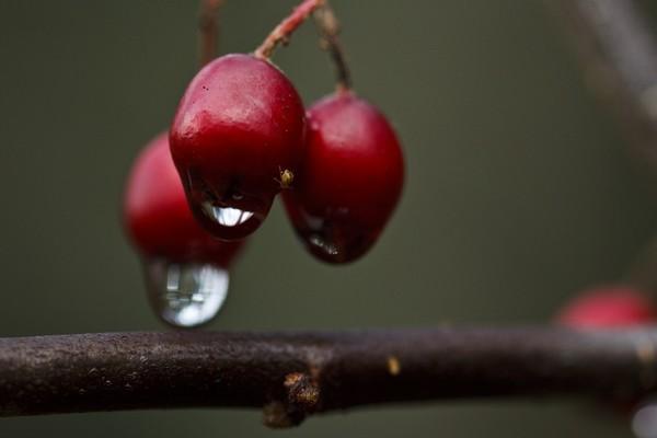 wet berrys