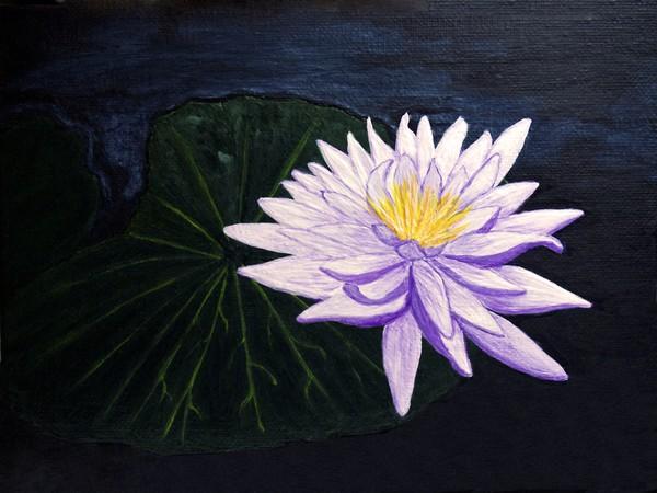 Lotus Blossom at Night